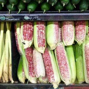 Baking corn...who knew!?